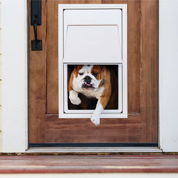 Haven't You Installed a Pet Door for Your Dog or Cat?